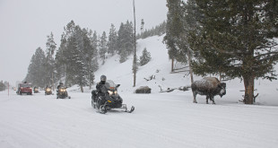 snowmobile_and_bison_2012