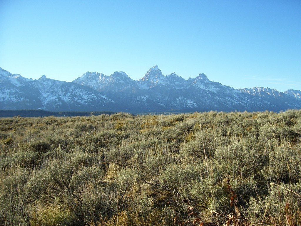 grand tetons from blacktail butte