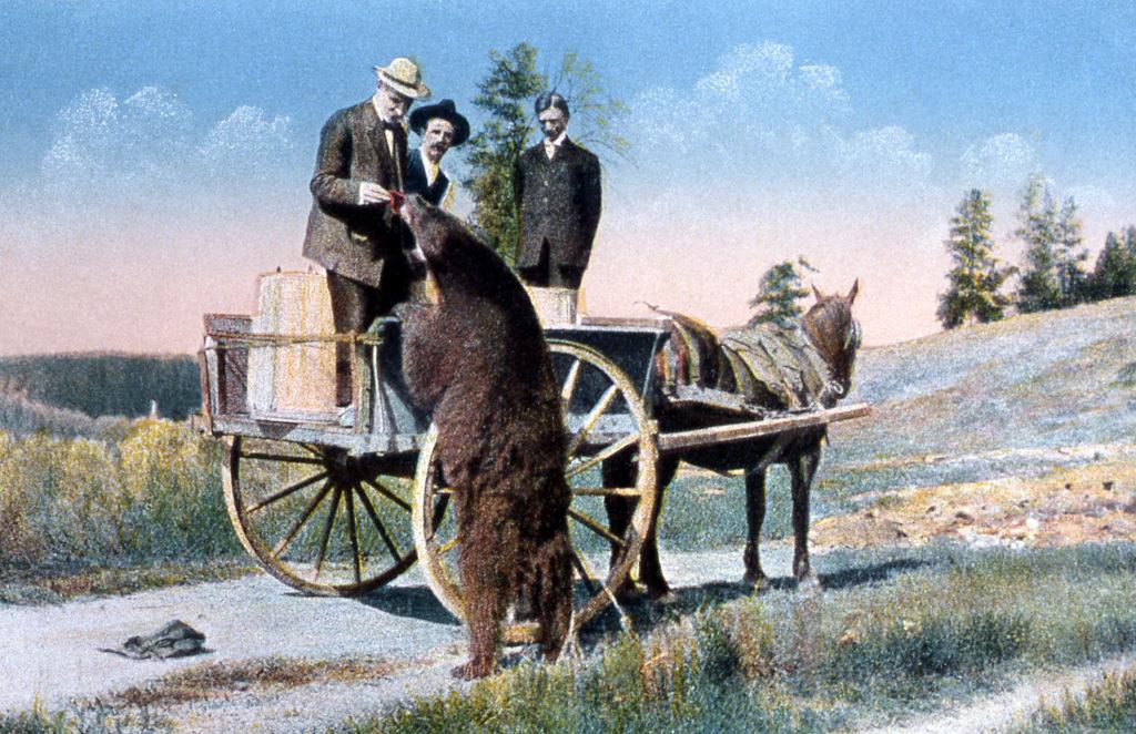 Postcard a tourist feeding a bear; Frank J Haynes; No date