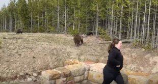Yellowstone Bear Incident 2021